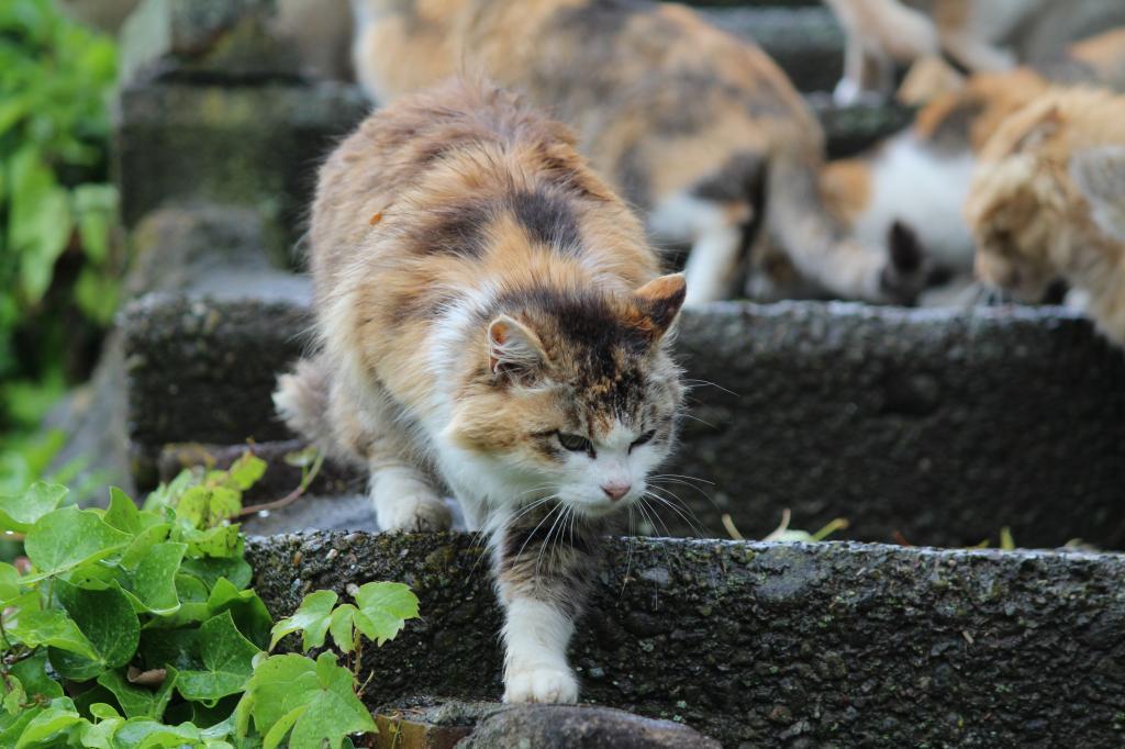 クリムト 猫