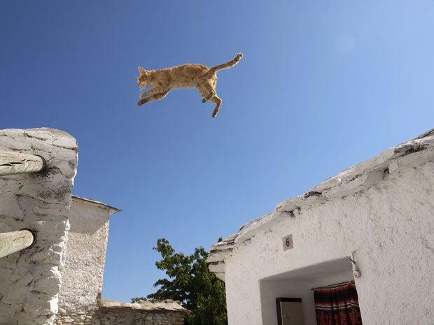 【岩合光昭】大ジャンプ~! 天空の白い村を飛び回るスペインの猫 〈週刊朝日〉|AERA dot. (アエラドット)