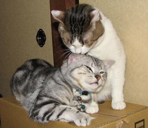 猫と一緒に入れる墓、喪中はがき...