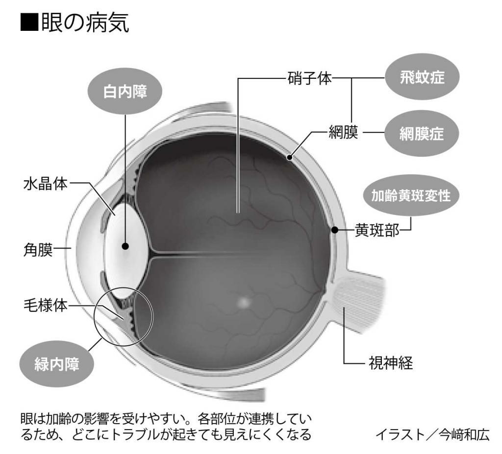 眼は加齢の影響を受けやすい。各部位が連携しているため、どこにトラブルが起きても見えにくくなる (イラスト/今崎和宏 週刊朝日2019年8月16日―23日合併号より)